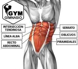 musculatura six pack