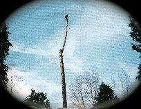 TreemanCloud