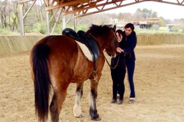 Les chevaux d'école