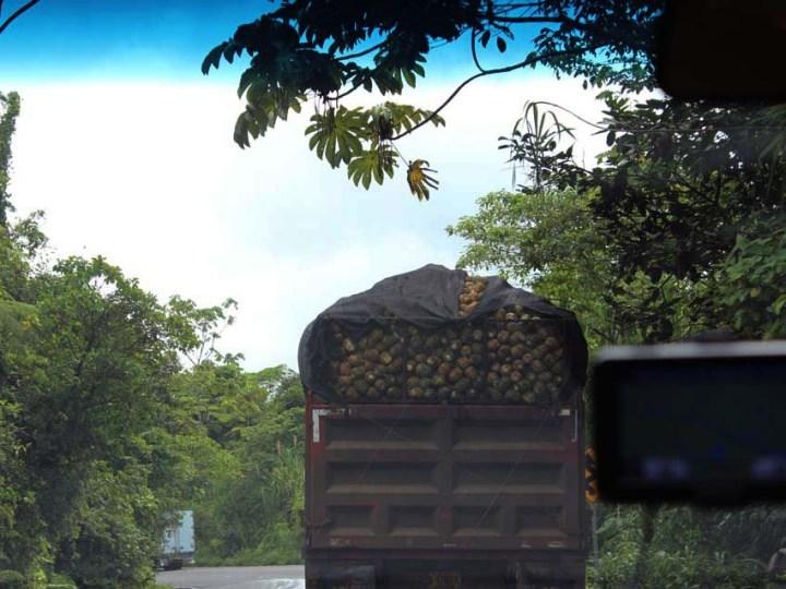 Transporter mit Ananas Puerto Limón www.gindeslebens.com