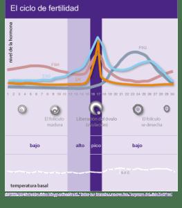Ovulación  Ovulación fertility and conception graph
