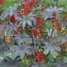 planta medicinal toxica