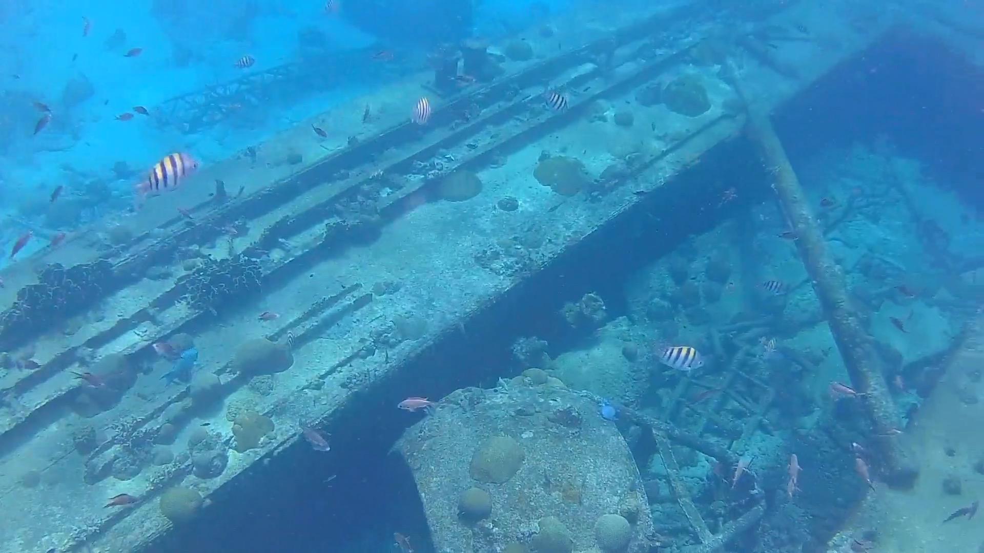 shipwreck-barbados-zebrafish