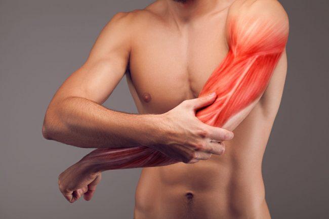 腕を太くしたい人が自宅で行うメニュー 腕の構造から詳しく解説