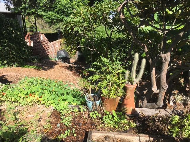 ベティさんのオーガニック菜園