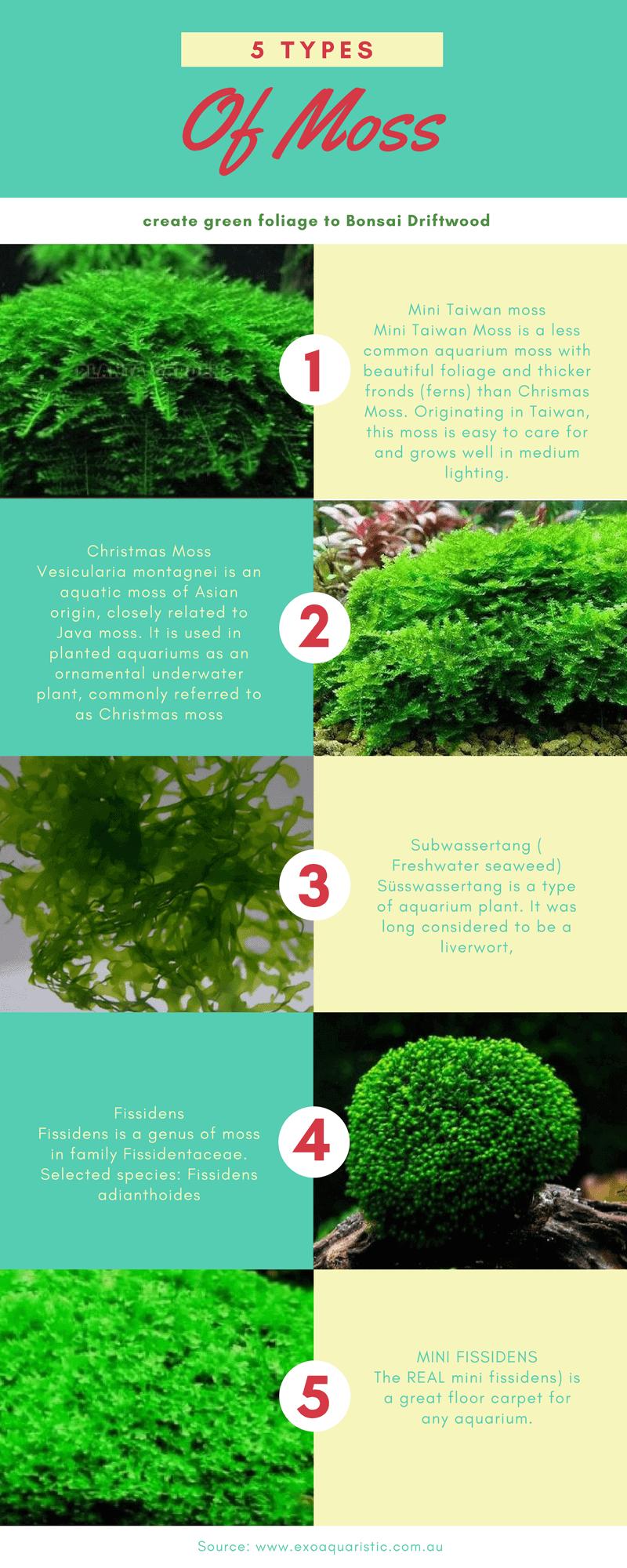 Best Aquarium Moss