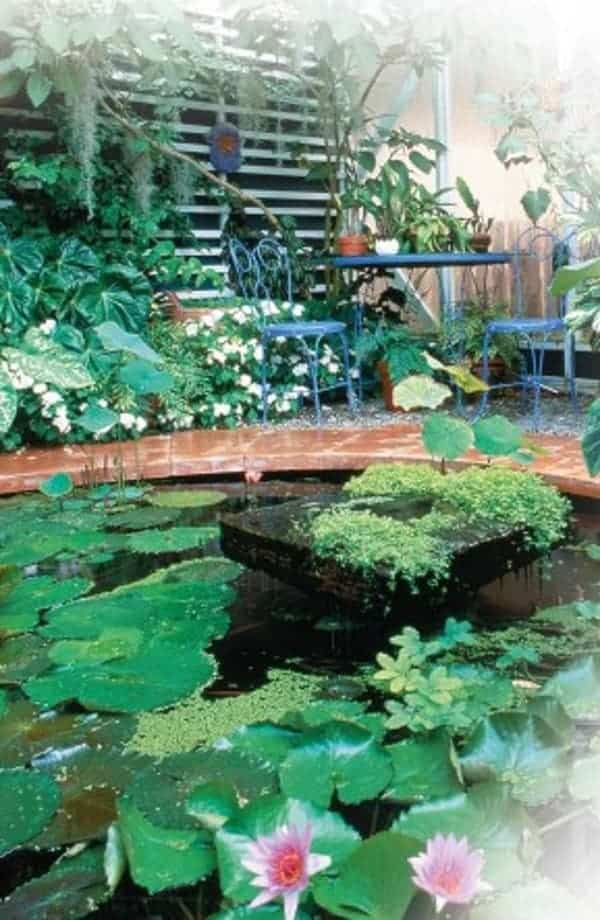 beautiful established indoor koi pond