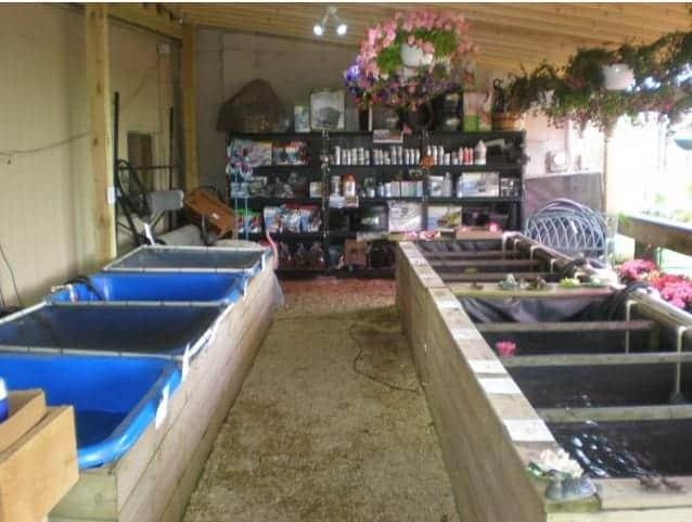 koi fish indoors koi pond