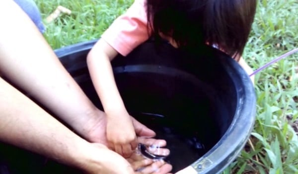 koi care Ways to Encourage Your Kids to Take Care of Their Koi