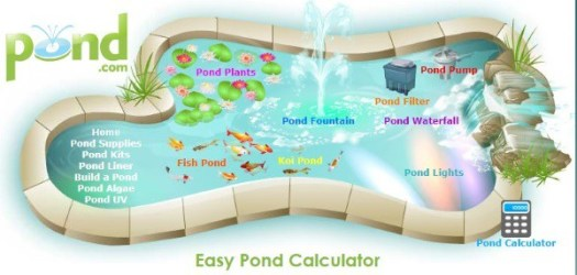 Koi pond maintenance effective tips for koi pond do it for Koi pond volume calculator