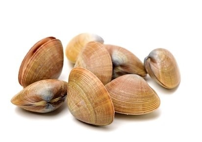10 Quick Tips About Fresh Water Clam