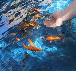 indoor koi pond by pond guy