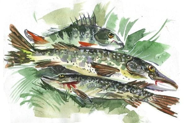 buy original art online fish painting