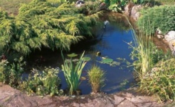 pond maintance
