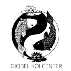 Giobel Koi Center Koi Farm – Beautiful Japanese Koi Fish For Sale Philippines