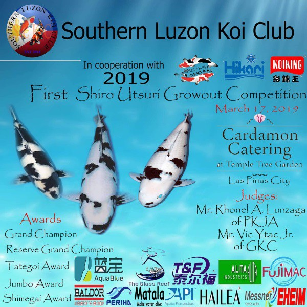 2019 Southern Luzon Koi Club 1st Shiro Growout Competition