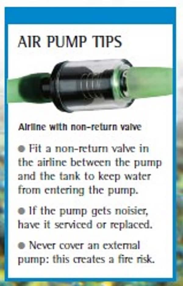simple guide to aquarium filtration