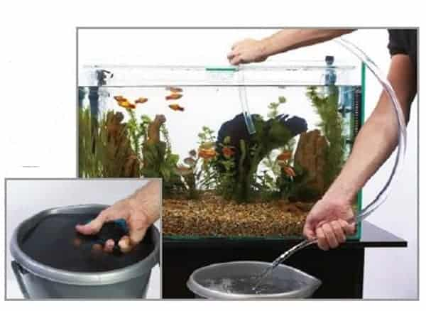 Beginners Guide on how to clean a fish tank
