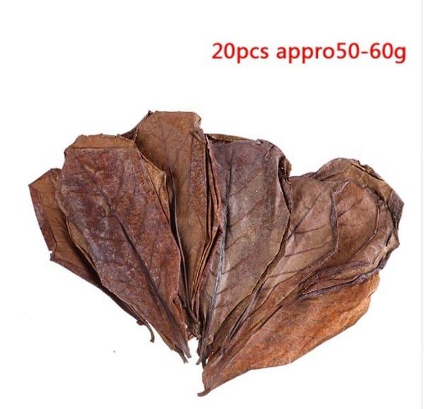 Indian Almond Leaf Terminalia Catappa Ketapang Dried Naturally Modern Design Pet Supplies Bright 50 G