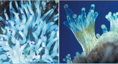 LIGHT AND INVERTEBRATES how to setup a saltwater aquarium