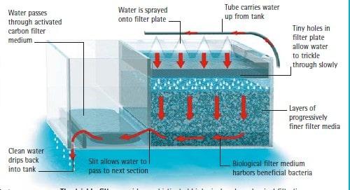 trickle filter saltwater aquarium how to do water change on saltwater aquarium