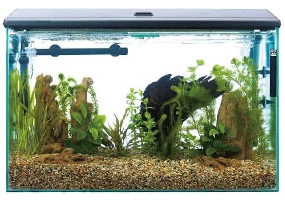 aquarium supplies at walmart