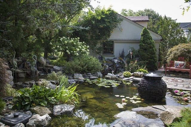 koi pond summer
