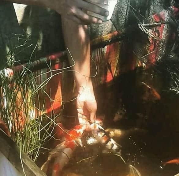 Hand feeding koi fish