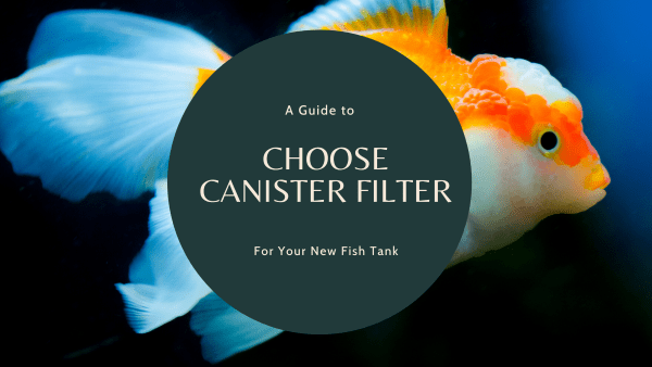 Canister Filter A Guide to Choose for Your New Fish Tank