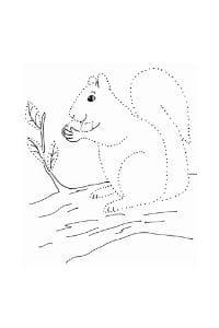 disegni tratteggiati per bambini lo scoiattolo