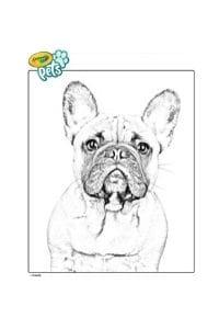 disegni da colorare in formato A4 bulldog francese