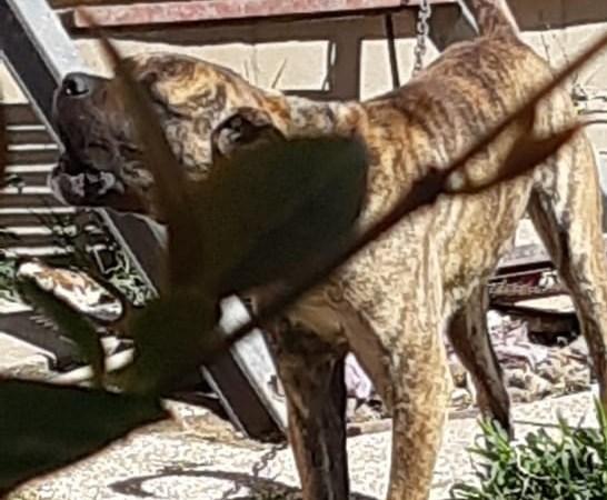 Marino, cane a catena non a norma: intervengono Guardie Zoofile