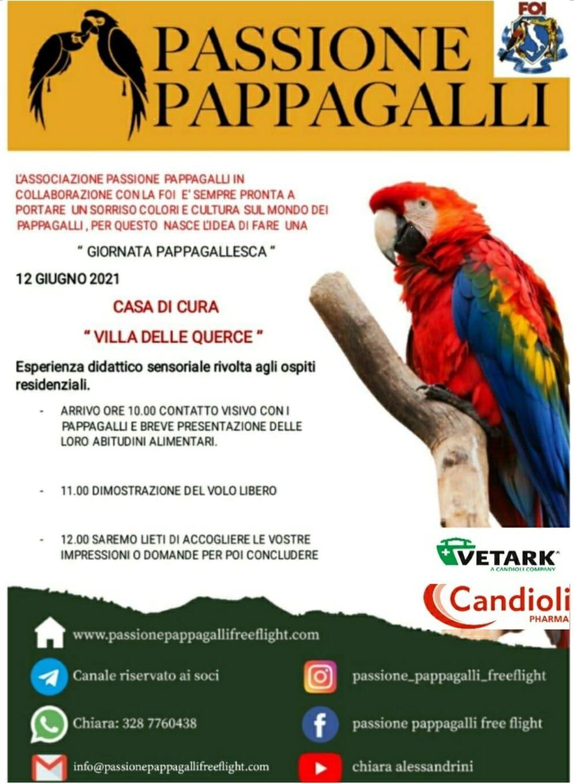 Nemi, dimostrazione di volo libero con i pappagalli