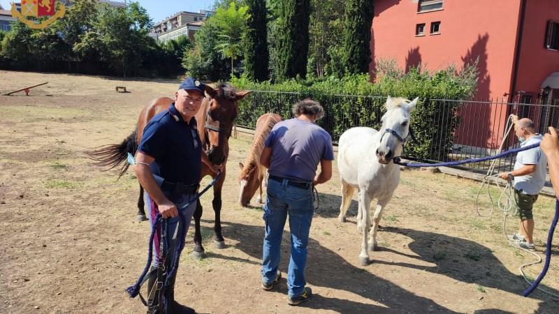 Roma, scappano cavalli da un maneggio in zona Marconi. Interviene la Polizia di Stato