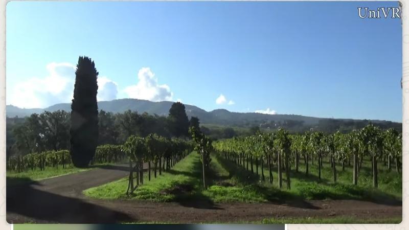 Il Vino Frascati si laurea in qualità all'Università di Verona
