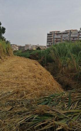 Pomezia, controllo e monitoraggio delle acque superficiali: interventi sul fosso della Crocetta
