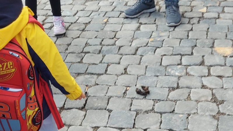 Genzano, madre denuncia la situazione di degrado e scarsa igiene davanti alle scuole Pascoli e De Sanctis