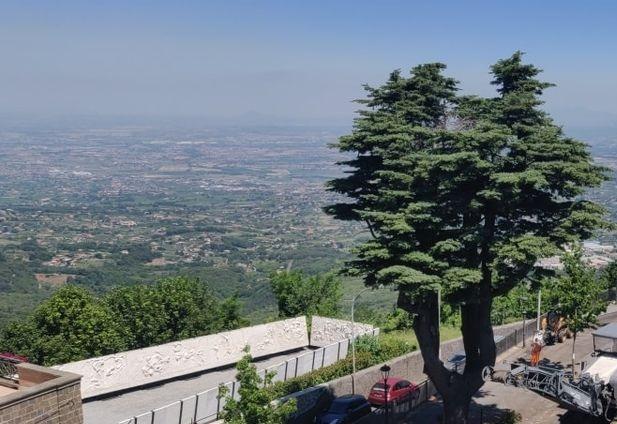 Rocca Priora, tre alberi entrano nell'Elenco degli alberi monumentali d'Italia