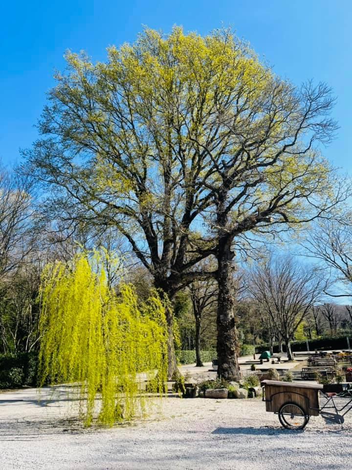 """Ariccia, domenica all'insegna del benessere fisico con la """"Foresta Olistica"""" al parco Romano. Tante le iniziative per grandi e piccini"""