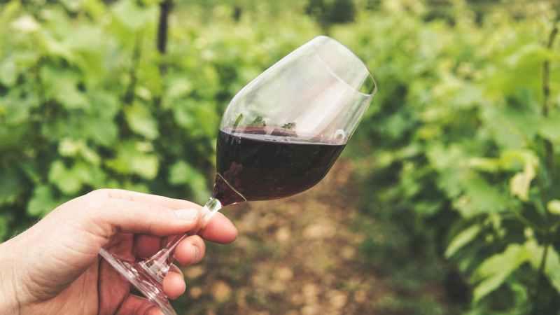 """Valmontone, creata associazione per il progetto """"L'arte da bere – le Dimore del vino"""""""