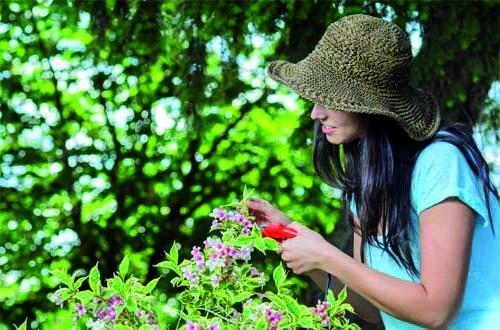 Altra maggioranza stessi corsi di giardinaggio Quelli del 2015 iniziano al Centro Fiera il 13