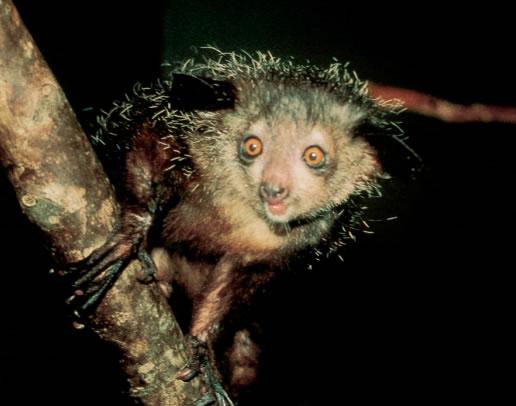 21 animali strani che vi faranno fare un salto sulla sedia  Giornalettismo