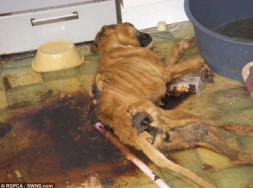 Quella che lascia morire il cane di fame in cucina