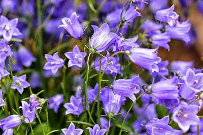 Ποιο λουλούδι χαρακτηρίζει το ζώδιο σου