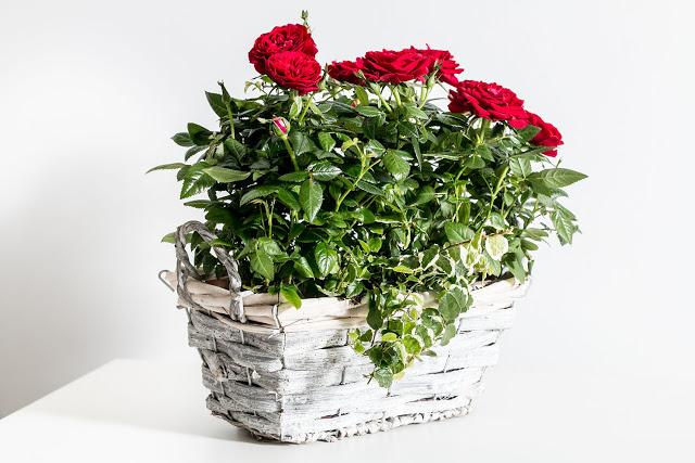 Ποιο λουλούδι χαρακτηρίζει το ζώδιο σου και γιατί;