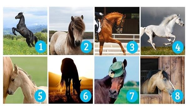 Tεστ: Ποιο άλογο σου αρέσει πιο πολύ; Διαλέξτε αυτό που σας τραβάει περισσότερο την προσοχή.