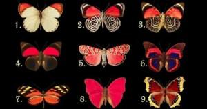 ΤΕΣΤ | Η Πεταλούδα Που Θα Διαλέξεις, Αποκαλύπτει Τα Συναισθήματα Και Τις Σκέψεις Που Κρύβεις Μέσα Σου…