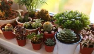 Read more about the article Τα πιο γρουσούζικα πράγματα που έχουμε στο σπίτι μας! Ειδικά το τελευταίο δεν το περιμέναμε με τίποτα!