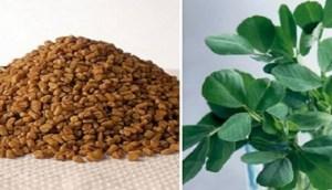 Τριγωνέλλα: Το βότανο που «χτυπάει» διαβήτη, χοληστερόλη και αυξάνει… το στήθος!