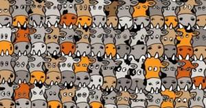 KOYIZ: Μόνο ένα μικρό ποσοστό των ανθρώπων μπορεί να εντοπίσει τον σκύλο ανάμεσα στις αγελάδες.